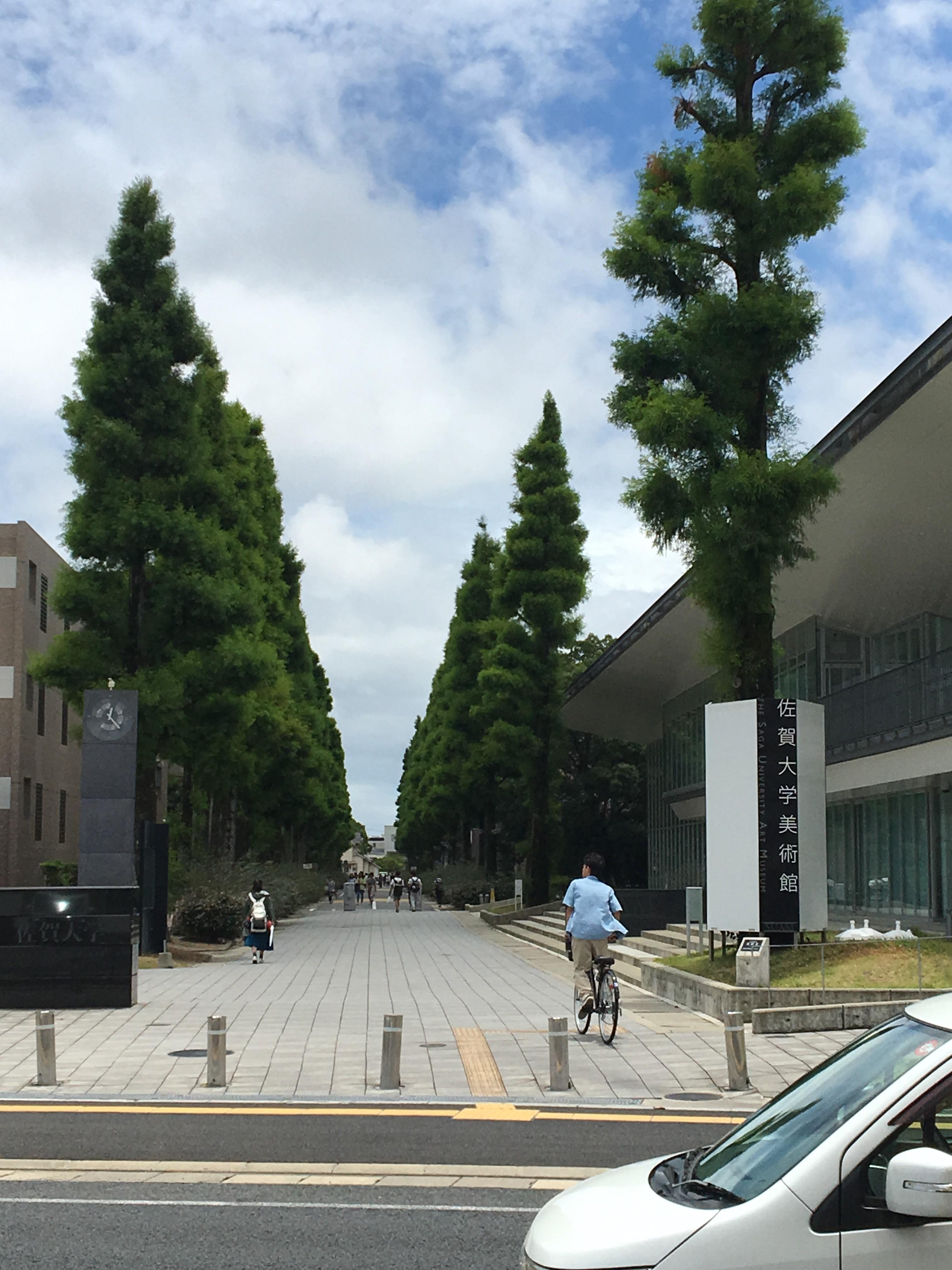 今回の1枚は、本庄キャンパスの北東に位置する大学正門から南に向かう通りです。この時期、左右の並木の緑がいちだんと色濃くなっています。